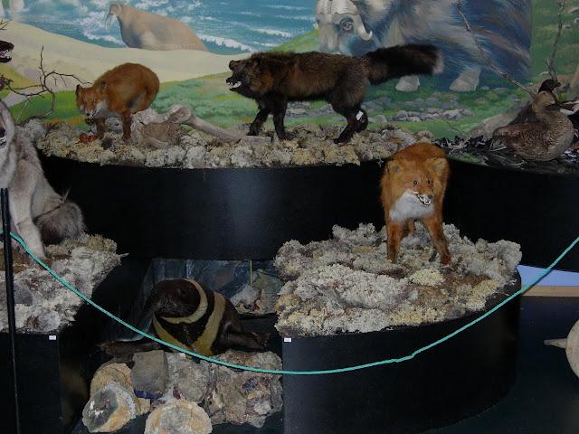 животные в музее