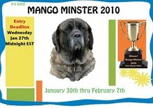 official contestants of mango minster 2010