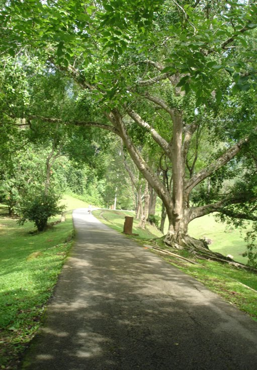 Traveling: 檳城植物園_Penang Botanical