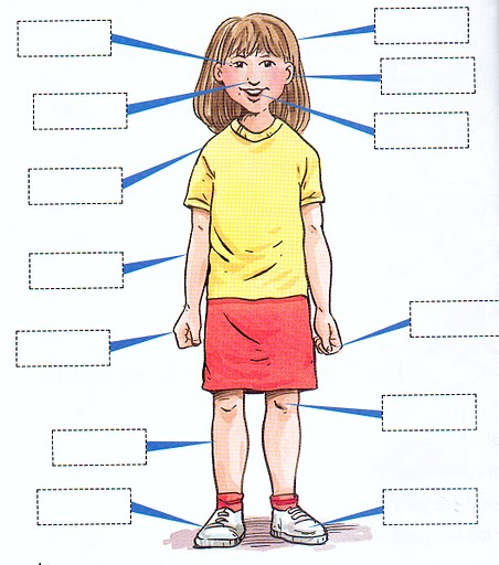 Printables Body Parts In Spanish Worksheet my body lessons tes teach parts of the in spanish quiz
