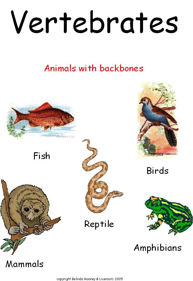 ANIMAL GROUPING 2: VER...