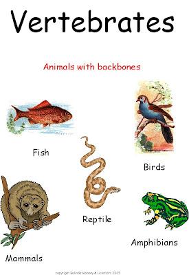 ANIMAL GROUPING 2: VERTEBRATES & INVERTEBRATES ...