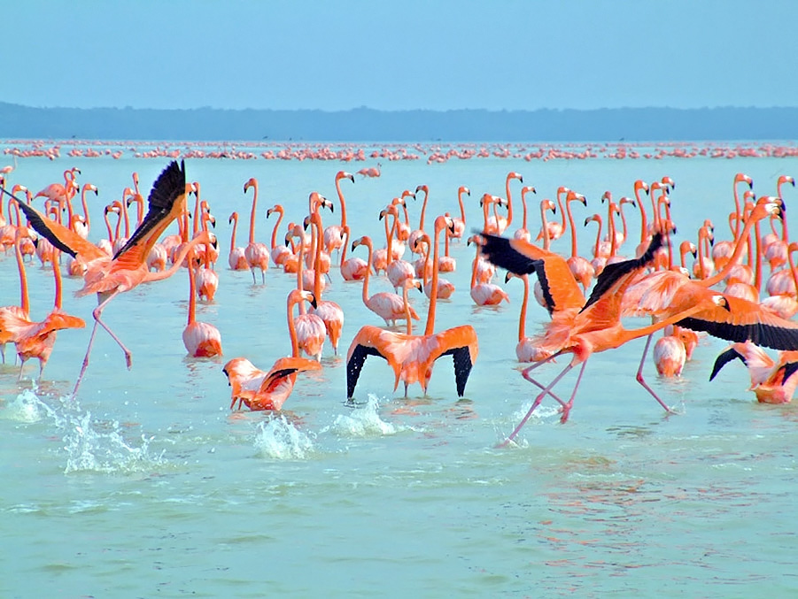 Flamingos in the Nearby Biosphere Reserve