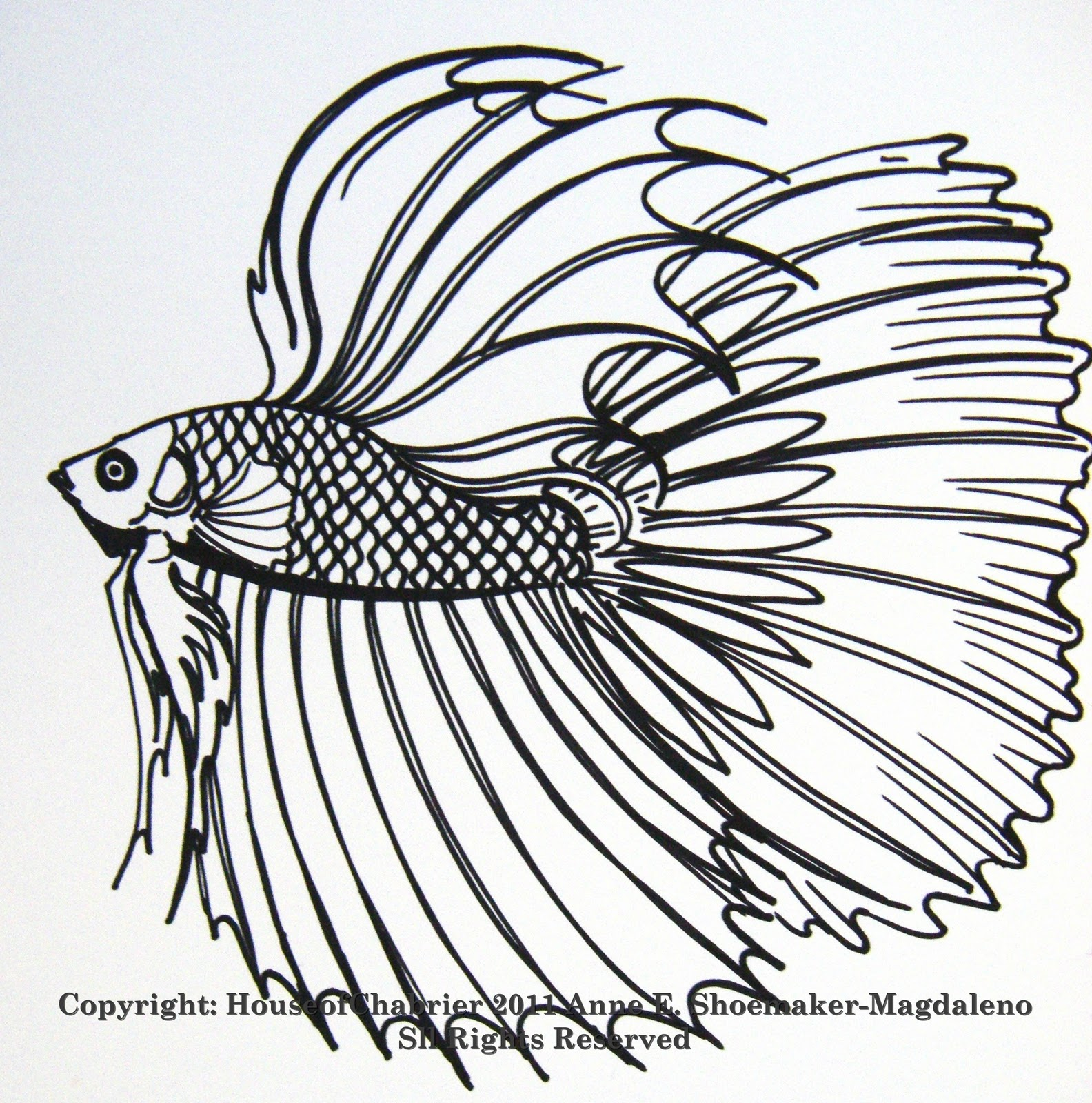 Betta fish drawing for Betta fish coloring pages