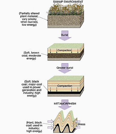 fossil fuels amp carbon cycle proprofs quiz