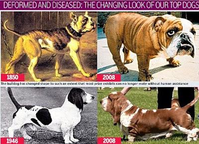 dog inbreeding effects