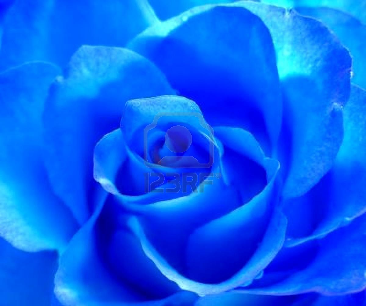 la blu
