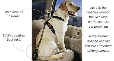 Properly Size The Petbuckle Seat Belt Harness Using Chest Cirference Sizing Measure Dog S Around Area Behind Front Legs