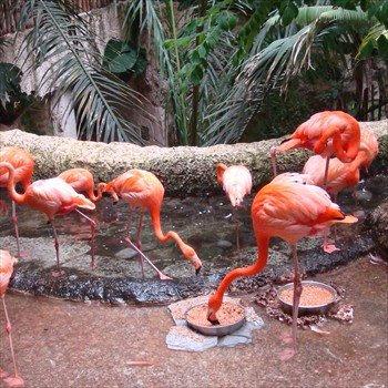 Flamingos at the Dallas World Aquarium
