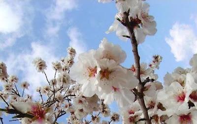La parole de l'Éternel me fut adressée en ces mots : Que vois-tu, Jérémie ? Et je répondis : Je vois une branche d'amandier - Jérémie 1, 11