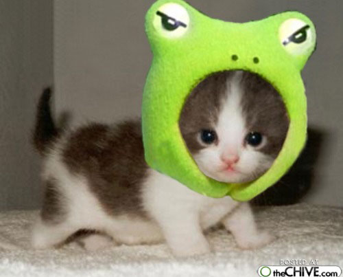 Funny Image Collection: A Collection Of Funny And Cute ...  |Weird Cute Animals