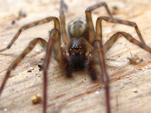BugBlog: Scary spider story