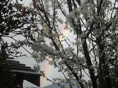 les murray an absolutely ordinary rainbow