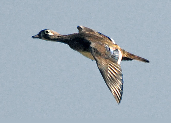 One Jackdaw Birding: To Autumn
