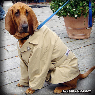 """Howl-O-Ween Dog Costume Contest & Parade 