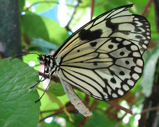 Sorry to tell the the Phuket Butterfly Garden has directly permanently shut <a href=