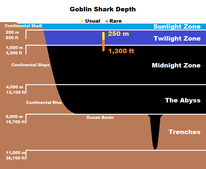 Real Monstrosities Goblin Shark