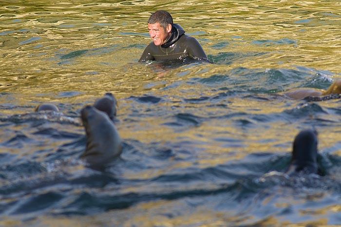 Patagonia Adventure Sea Lions Dive in Peninsula Valdes Patagonia Argentina