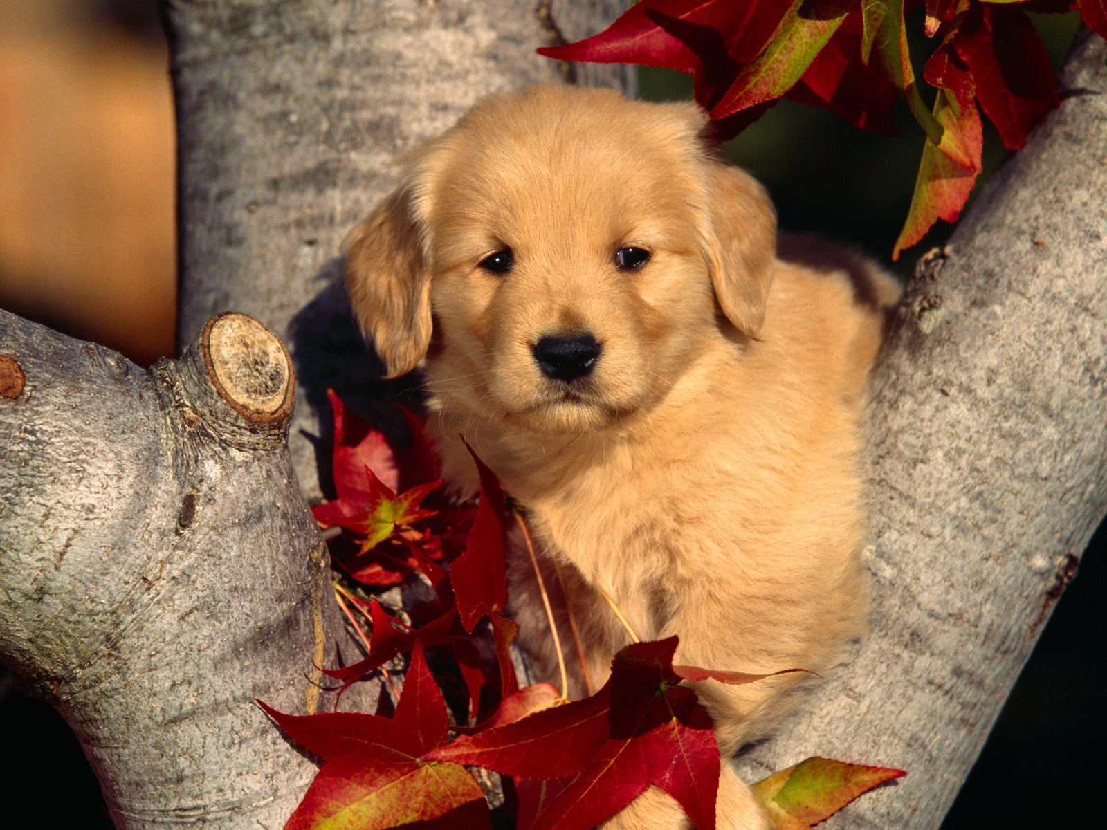 Tiptop 3d Hd Wallpapers Collection Beautiful Dogs Wallpapers