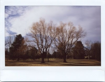 Snowless Winter - Instax Photograph by Joe Beine