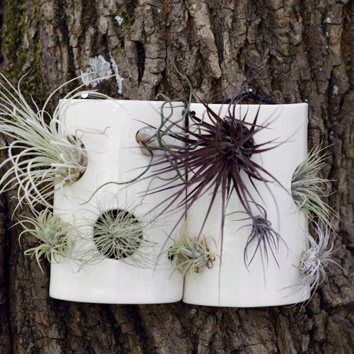Pigeon Toe Ceramics Out Of Portland Oregon Hand Make These Half Cylinder Wall Tiles For Nestling Air Plants I Would Love To Have A Trio On