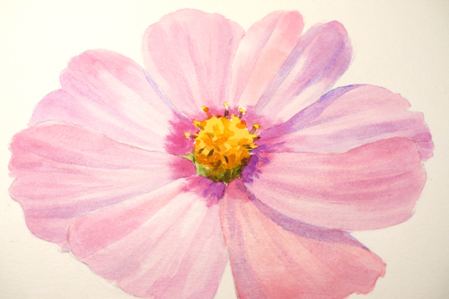 paint draw paint learn to draw water color basics a cosmos flower