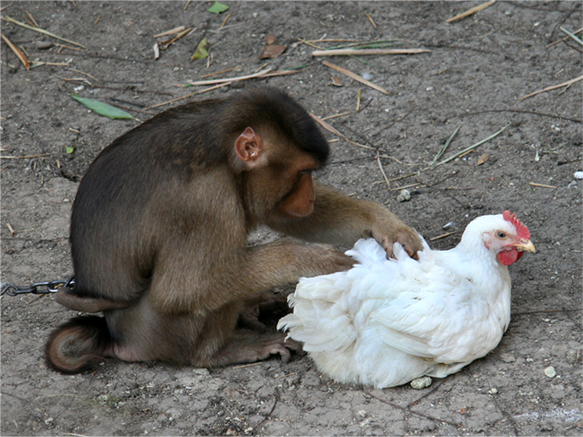 Contoh Cerita Fabel Monyet Dan Ayam Viver E Afinar O Download