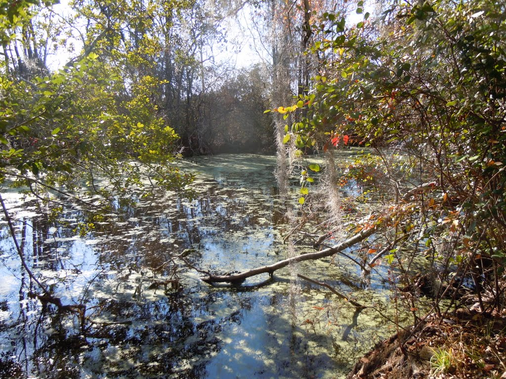 Okefenokee Swamp Live Exploration