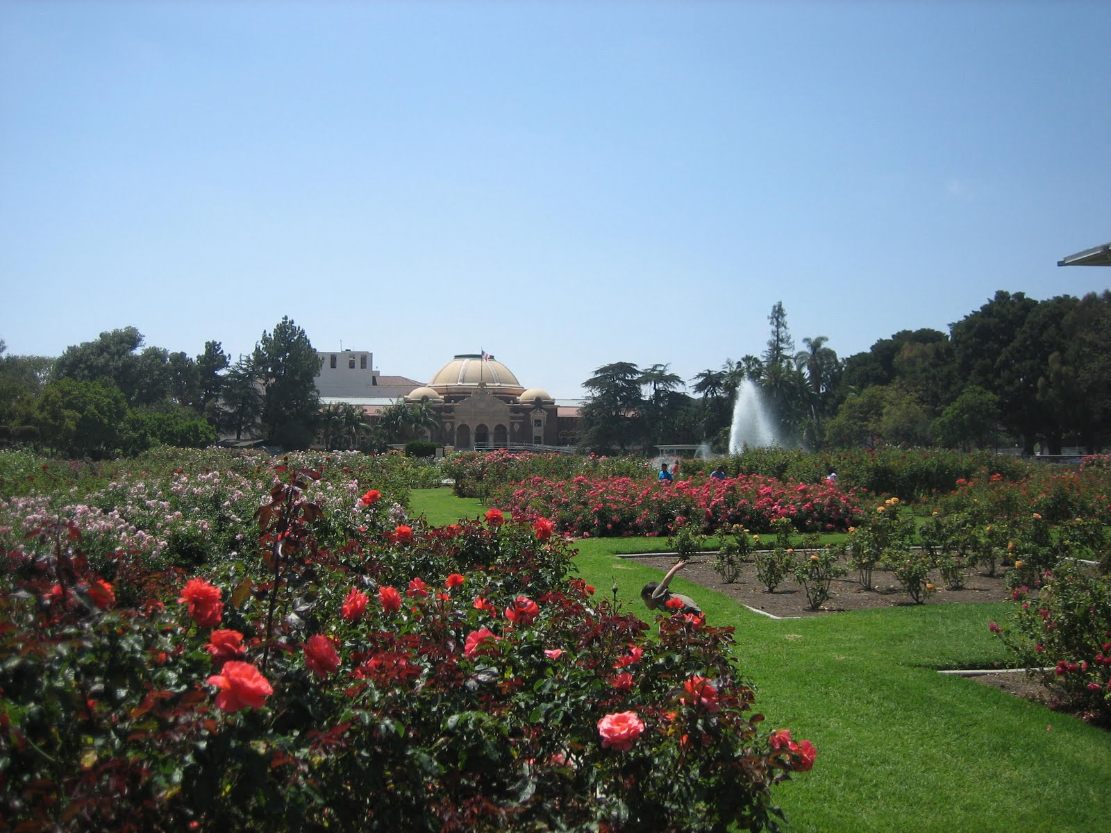 Roses In Garden: L.A. Places: Exposition Park Rose Garden