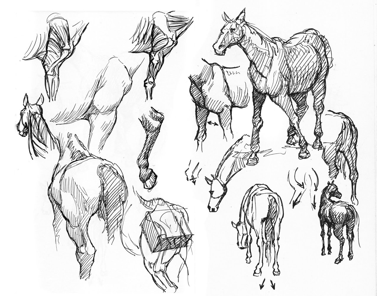 This is an image of Versatile breyer horse coloring pages