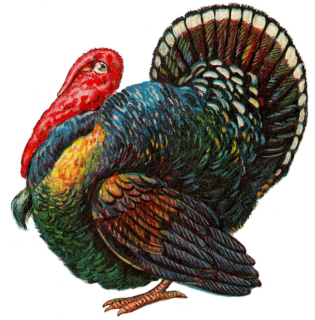 thanksgiving-turkey-graphicsfairy003b.jpg (1028×1044)