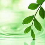 Abı Hayatı anlatan ucu suya değen yapraklı bir yeşil dal