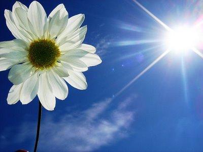 Flor+e+Sol.jpg