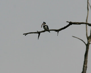 Birds from Behind : 21 March 2010