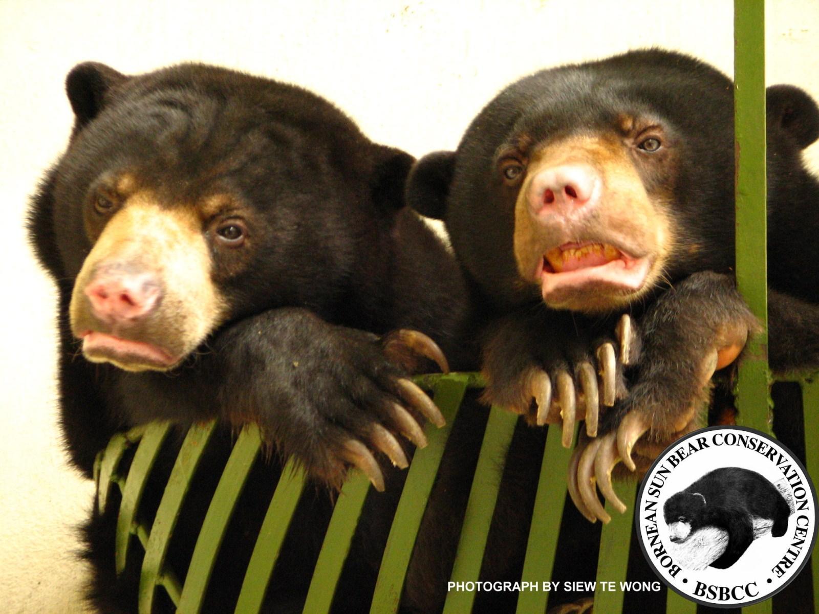 7eabcaaf5ba znd sep oct 2010 - American Association of Zoo Veterinarians (AAZV)