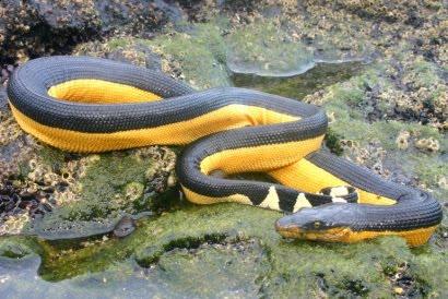 serpientes el salvador