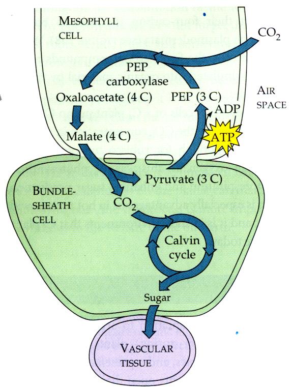 Biología1 C201: Metabolismo