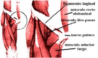 Pubalgia Osteopatía Dinámica De Pubis Tritim Triatlon Rosario