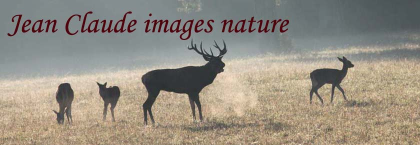 jean claude images nature