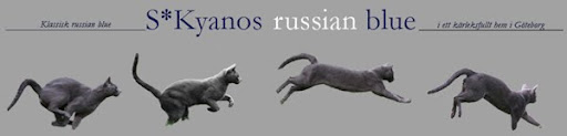 Kyanos Russian blue