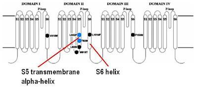 Sandwalk: DDT Blocks the Voltage-Gated Sodium Channel