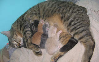 4 cute kittens and mommy cat