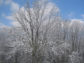 Snows on Trees