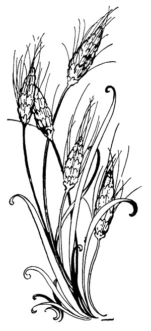 free clipart images wheat - photo #49