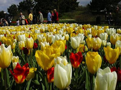 Expozitie flori Olanda - Keukenhof