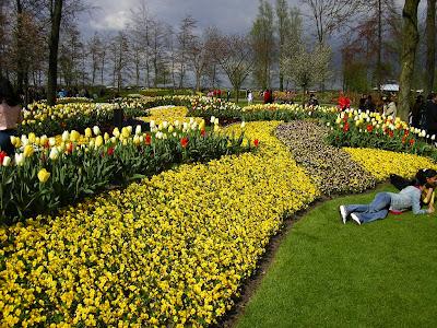 Amenajari florale Olanda