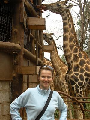 Imagini Nairobi: crescatorie de girafe