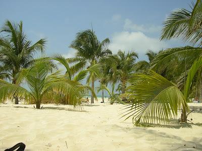 Nisip alb, palmieri, plaja exotica Caraibe