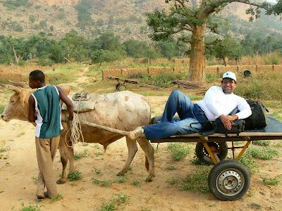 Transport in Pays Dogon: caruta cu boi