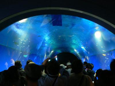 Obiective turistice Japonia: Aquarium Osaka coridor intrare